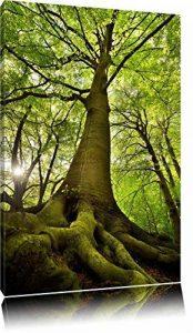 Grand arbre dans la jungle Format: toile 100x70auf, XXL énormes Photos complètement encadrés par la civière, l'impression de l'image Art mural avec cadre, moins cher que peintures à l'huile et de l'image, aucune affiche ou poster de la marque Pixxprint image 0 produit