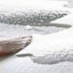 Hahnemühle Harmony Bloc aquarelle 12 feuilles 300 gr 21 x 29,7 cm, Moulin du coq de la marque Hahnemühle ESPACEBEAUXARTS image 4 produit