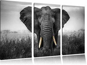 magnifique noir / blanc sur l'image 120x80 sur toile 3-pièces de l'image de toile éléphant, énorme XXL Photos complètement encadrée avec civière, art impression sur murale avec cadre, gänstiger que la peinture ou la peinture à l'huile, pas poster ou une a image 0 produit